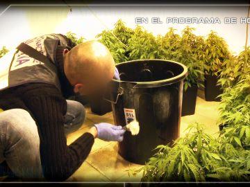 Buscando huellas en los útiles para cultivar marihuana
